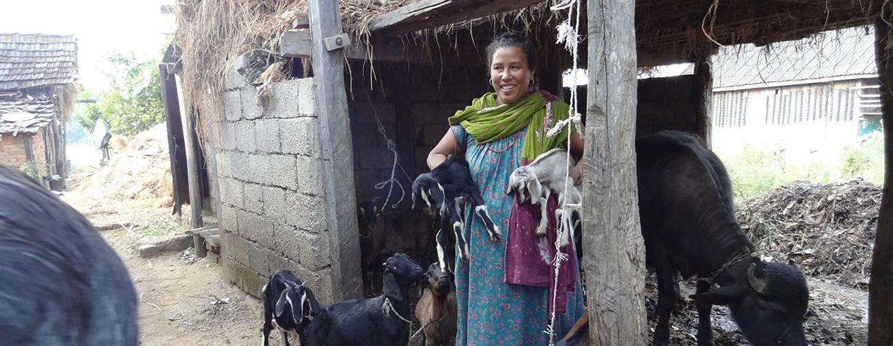 Goats Project - Nepal